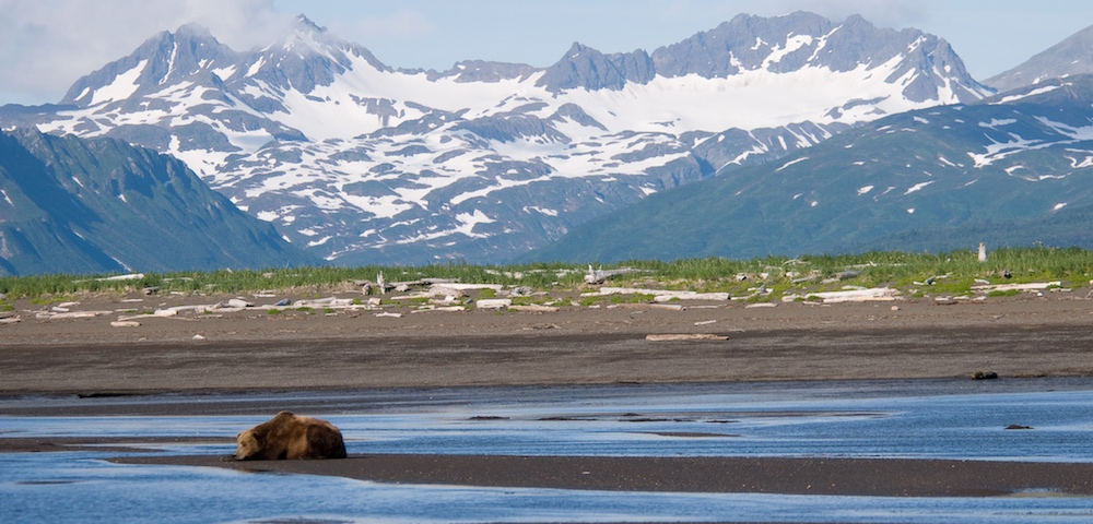 Bear salmon fishing in Katmai National Park and Preserve in Alaska.