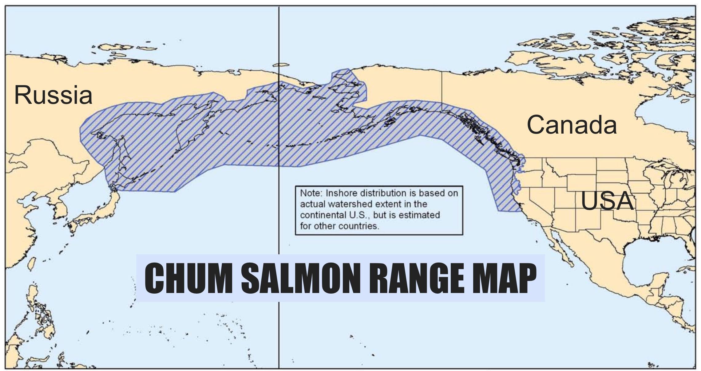 International map showing chum salmon - Oncorhynchus keta - saltwater range.