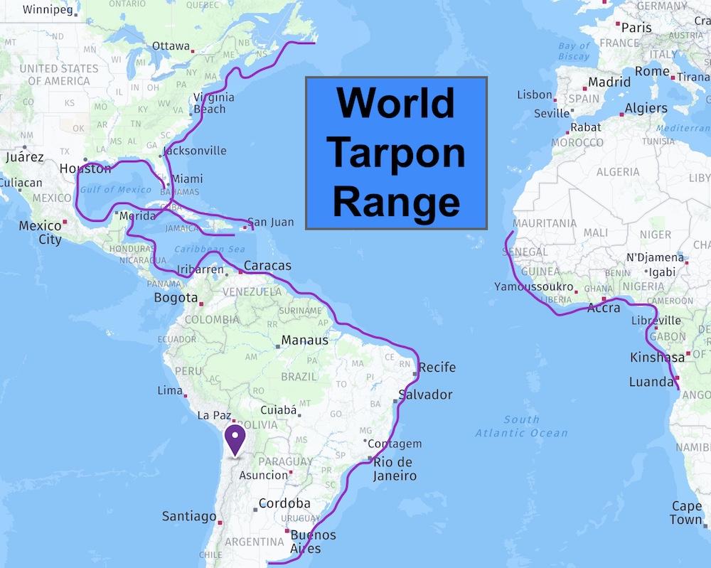 World tarpon range map: USA, South America, Africa.