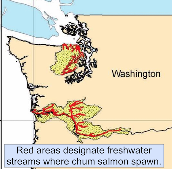 Critical areas of Chum Salmon spawning which takes place each year in the fall.