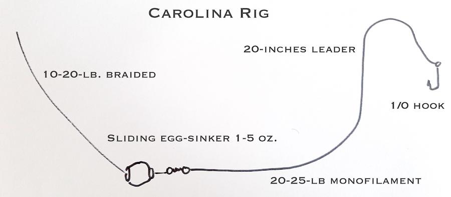 Carolina Rig for catching sheepshead fish in Florida.